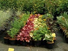 jardinerie-jpg